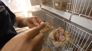 Ptice Kao Ljubimci I Uzgoj Ptica