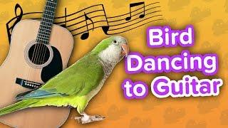 Birdie on Guitar & Cradling Cat! // Funny Animal Compilation