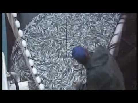 Xxx Mp4 Fishing Vessel Purse Seiner Ship Loading Sardine In Croatia Part 2 HD 3gp Sex