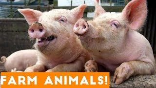 The Funniest Farm Animals Home Video Bloopers of 2018 Weekly Compilation | Funny Pet Videos