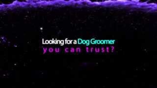 Pet Grooming In The USA