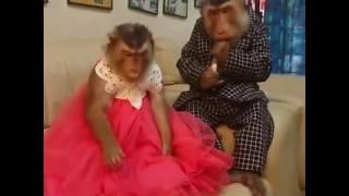 Gippy Grewal Feat Bohemia: Car Nachdi Official Video