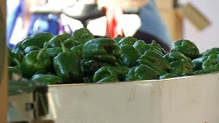 Free Produce Events Fight Against Summer Hunger