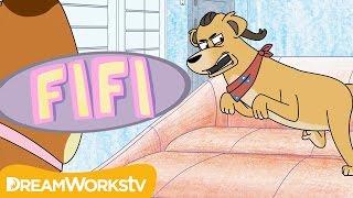 Dog Gone Crazy | FIFI: CAT THERAPIST