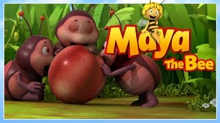 Maya the bee - Episode 25 - Mother Willi