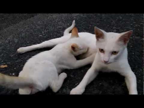 母乳を飲む子猫 Kitten is drinking  a Breast milk