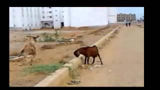 Mortal Kombat (Animals Style)