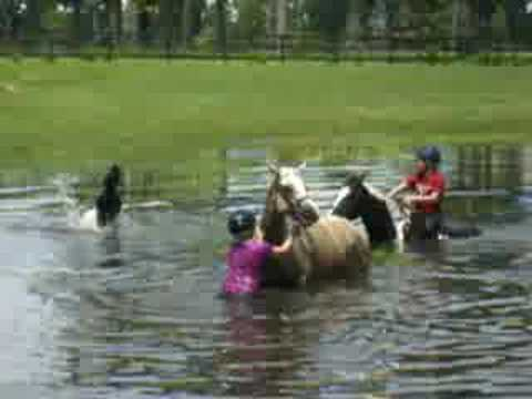 my horse and i swimming