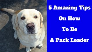 5 Amazing Tips On How To Be A Pack Leader