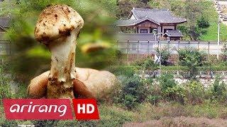 [4 Angles] Ep.190 - Hanok / Capturing the Magic of Autumn / Jeju Olle / Matsutake _ Full Episode