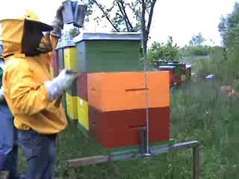 pčele bees rotenon