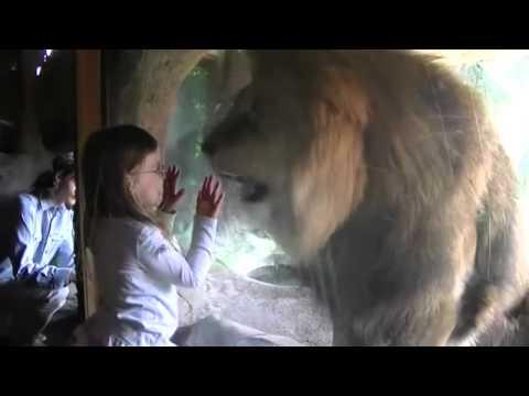 leon ataca a una niña