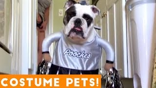 Try Not To Laugh At These Funny Pets In Costumes Video Compilation | Funny Pet Videos!