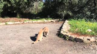 Wild Cats Fight