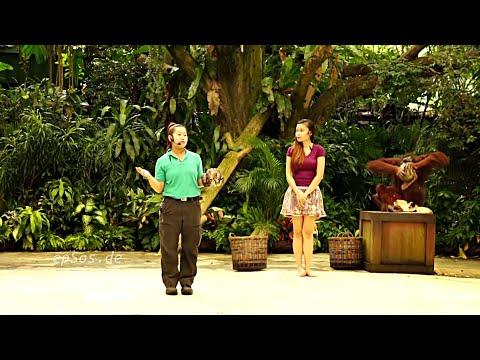 Xxx Mp4 Funny Animal Show In Singapore Zoo 3gp Sex