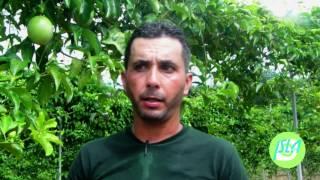 Al descubierto mayor cultivo de parcha en Puerto Rico