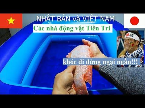 Xxx Mp4 Việt Nam Nhật Bản – Đau Bụng Với Màn Tiên Tri Của Các Nhà động Vật Trận Vietnam Vs Japan – Asiancup 3gp Sex