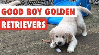 Good Boy Golden Retrievers | Funny Dog Video Compilation 2017