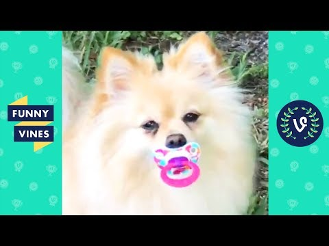 Xxx Mp4 TRY NOT TO LAUGH Funny Animals Cute Pets Compilation Funny Vines August 2018 3gp Sex