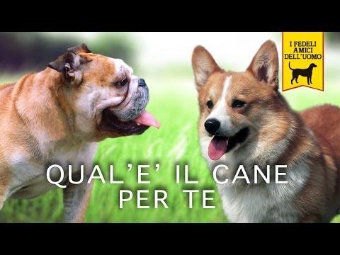 QUALE E IL CANE PER TE trailer documentario
