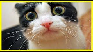 Video Kucing Lucu Cantik Manis Imut Banget Menari dan Menggemaskan   Terlucu Di Dunia !