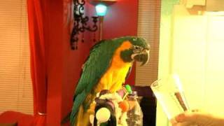 The Arrival of a Baby Parrot...the First Minutes of Training