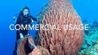 Sponges and Cnidarians