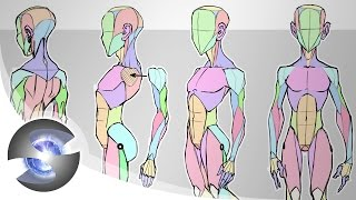 Sycra's Simplified Anatomy Model