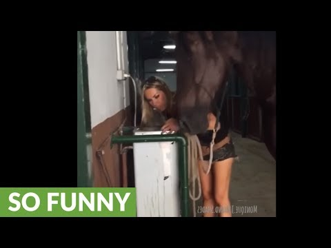 Thirsty horse enjoys drinking from human water fountain