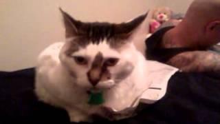 Fat Fluffy Kitty VS Tiny Bald Pussy