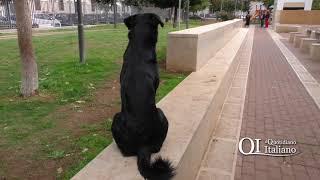 Bari, cani sciolti nel parco Mimmo Bucci al Libertà