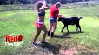 Two Gals Trying to Ride a Goat...Should Be Interesting