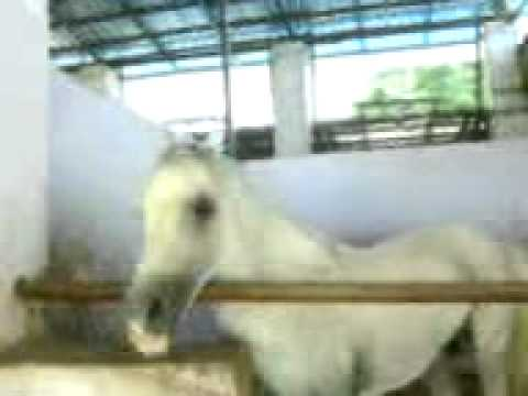 Xxx Mp4 Funny Horse 3GP 3gp Sex