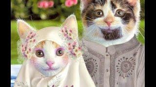 ANNIMALS FUNNY VIDEOS Curhatan Kucing Lucu,Gokil Banget 2015 HD