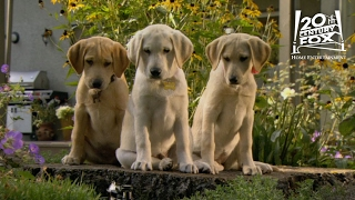 """Marley And Me The Puppy Years 