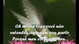 Praiera- O beija flor e a Rosa