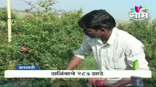 Jagtap brothers' milk occupation success story