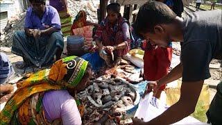 Fish Market | Riskier Morning Fish Bazar | Fish Cutting in the Market on Train Line