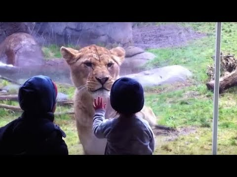 10 MOST STUNNING MOMENTS AT THE ZOO