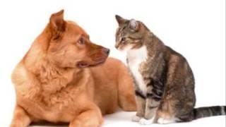 Peter, Vaso a Beata detom - Pes a macka