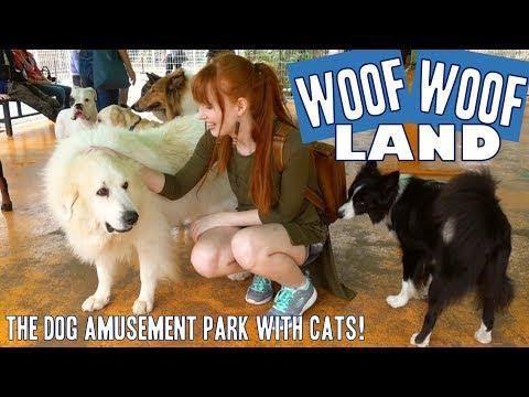 Xxx Mp4 Japan S Dog Amusement Park WanWan Land 3gp Sex