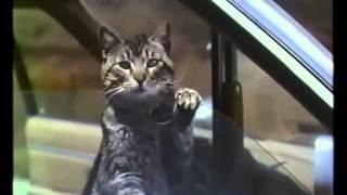 La Nuit déchirée (1992) Bande-annonce française V.F