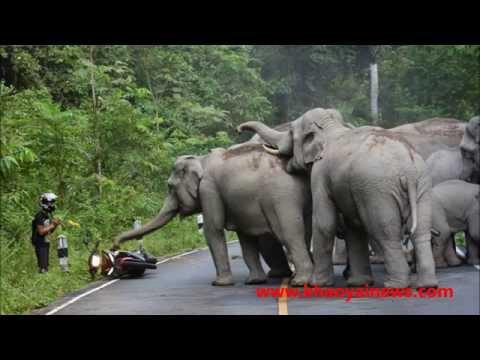 Xxx Mp4 Elephant Herd Attacks Motorbike 3gp Sex