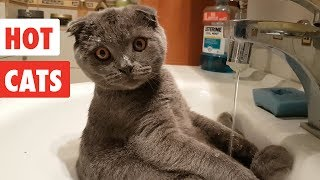 Hot Cats | Funny Cat Video Compilation 2017