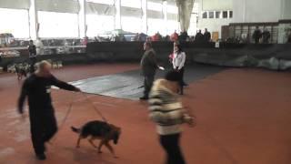 Выставка собак   СТРАЖ ДОНБАССА, Донецк 2011   1