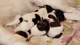 Sudden gave birth to 4 puppies!