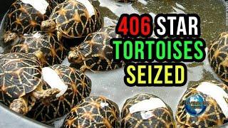Woman Held with star tortoises, 406 Indian Star tortoises seized | Overseas News