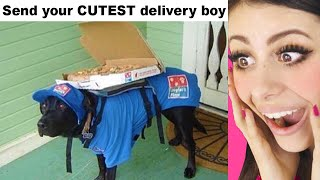 Funniest Delivery Boys Who Had Just ONE JOB
