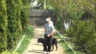 Dog Training : Rottweiler Attack Commands