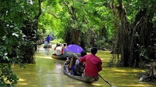 Ratargul Swamp Forest  রাতারগুল জলাবন